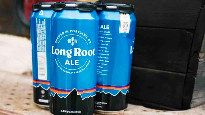 Made by Hopworks Urban Brewery of Oregon using a perennial wheatgrass called Kernza, Long Root Ale is the newest product from Patagonia Provisions. It will be launched Oct. 3 during an event at Whole Foods Market in Oxnard.