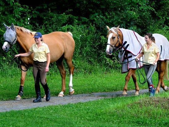 DOMINANT_SA_Lyme_Horses_Walk.jpg