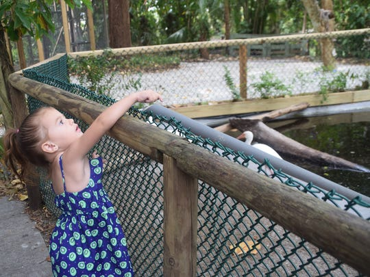 Audra Hardin, 3, feeds the turtles at the Everglades Wonder Gardens.