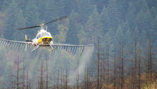 A helicopter sprays herbicides in a burned section of forest.