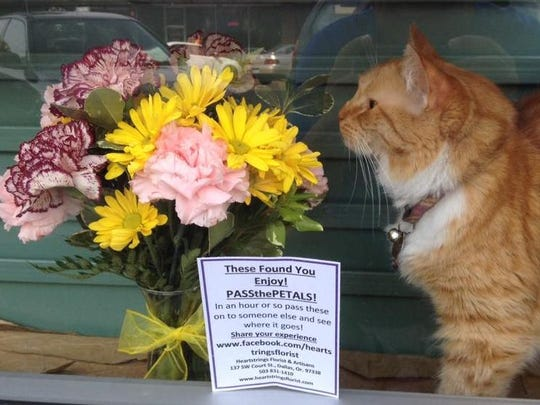 A bouquet of flowers that originated from Heartstrings Florist & Artisans in Dallas shares front window space with Rose the cat on Oct. 8, 2015, at The Book Bin in downtown Salem.