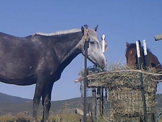 636499710373769268-HorseFeederBizTab.jpg