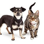 Dogs & cats available for adoption at SPCA in Vineland