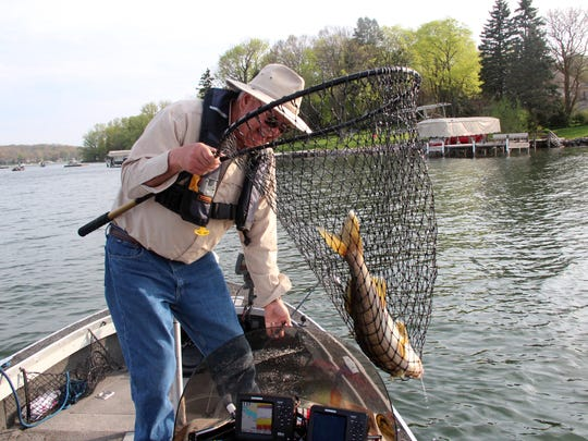 An angler nets a walleye while fishing on a lake in Waukesha County. A proposed rules change would place an 18-inch minimum size limit and a daily bag limit of three walleyes on all inland waters of six counties in southeastern Wisconsin. Photo taken May 7, 2016 by Paul A. Smith.