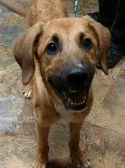 Pet of the Day: Frankie Valli.