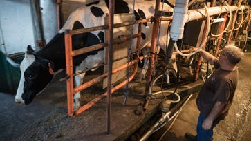 Kentucky dairy farmers face devastation as milk market runs dry