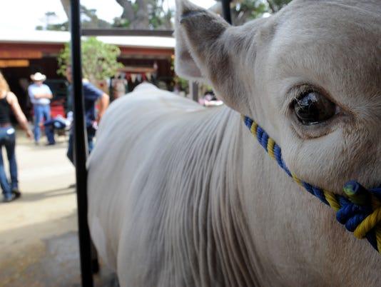 Fair-Junior-Livestock-Auction-8.jpg