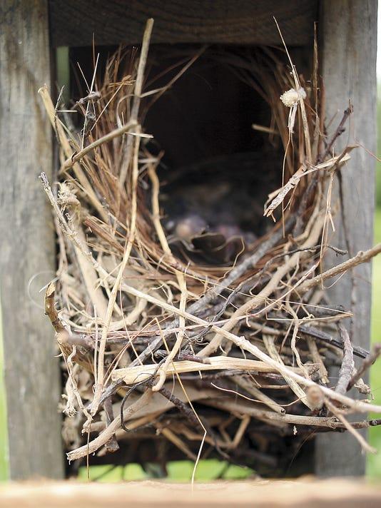 Bird House Builder_Clar.jpg