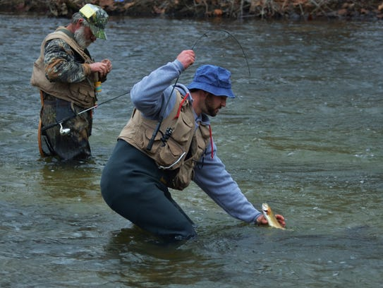 A fisherman carefully brings a trout to hand on one