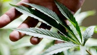 Marijuana deliveries will be fully legal in the city of Ventura starting in November.