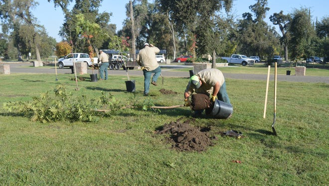 Mike Lupio, front, and other County parks workers plant trees at Mooney Grove Park during Make a Difference Day on Saturday.