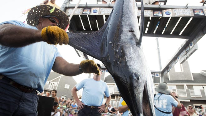 Weight master Alex Davis of Salisbury loads Baltimore resident Robert Gothier's white marlin on the scale during day two of the White Marlin Open in Ocean City.