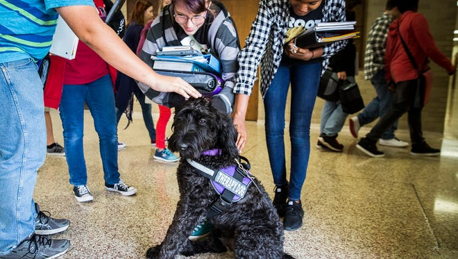 Students stop during pass period to pet Merlin, the therapy dog at Central High Schoo