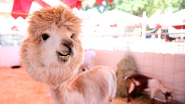 5 animals at the Oregon State Fair you shouldn't miss