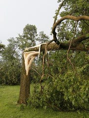 A large tree snapped in half by high winds from a storm