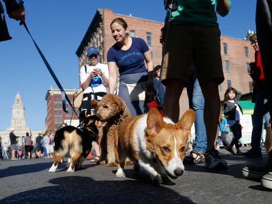 Pet owners and their pooches mingle in the street Saturday, May 6, 2017 at the Downtown Farmers' Market in Des Moines.