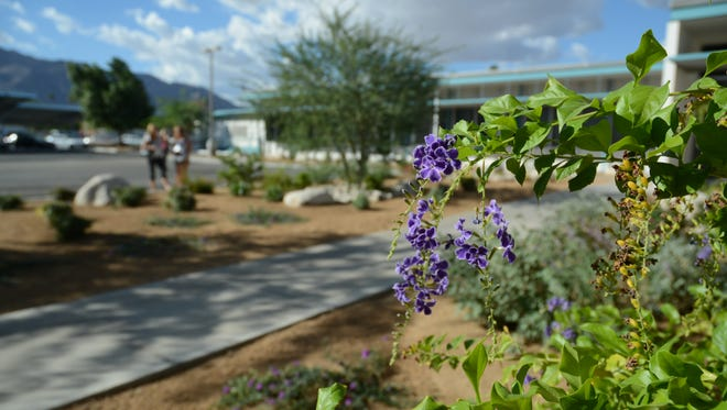 """Palm Springs Unified School District installed a """"demonstration garden"""" outside of their building on Farrell and Baristo to give community members an example of the types of plants that do well in the desert."""