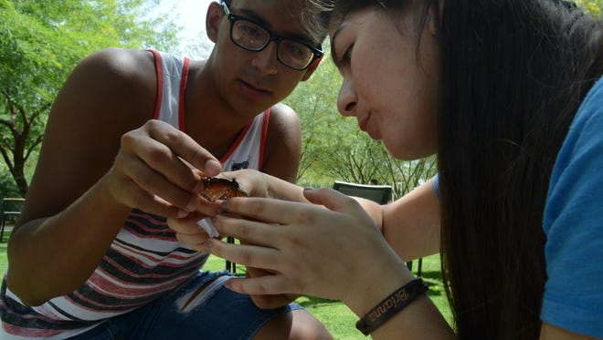 Two students from Coachella Valley High School tag a monarch butterfly caught in the gardens at Sunnylands.