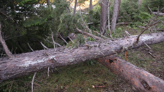 A photo taken after the June 19 storm in the Boundary Waters Canoe Area Wilderness shows the damage left behind.