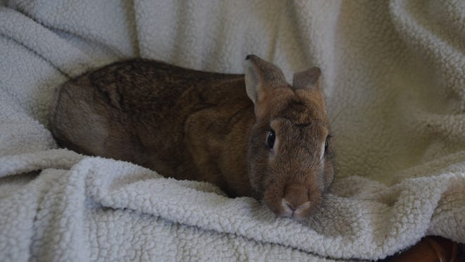 Buzz is one of the bunnies rescued from the floods of Louisiana.