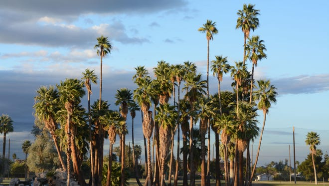 Palm trees at Encanto Park tower over the surrounding area.