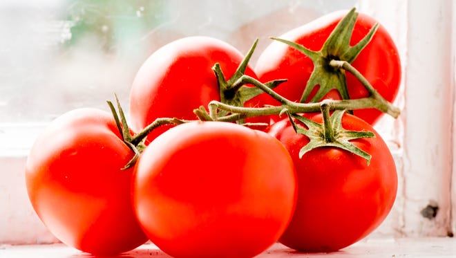 Tomatoes are one of the most popular backyard garden growers.