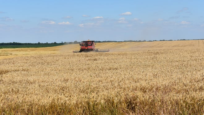 The harvesting of Union County's wheat crop is underway and here a combine collects the crop in a field off KY 56, a couple miles east of  Morganfield.