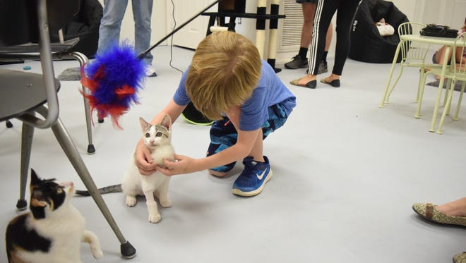 Marshall Rosenberg, 8, plays with a kitten at the grand opening of the Fat Cat Cafe Saturday, Aug. 26, 2017.