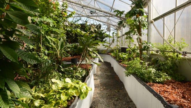 Inside the Goodins greenhouse.