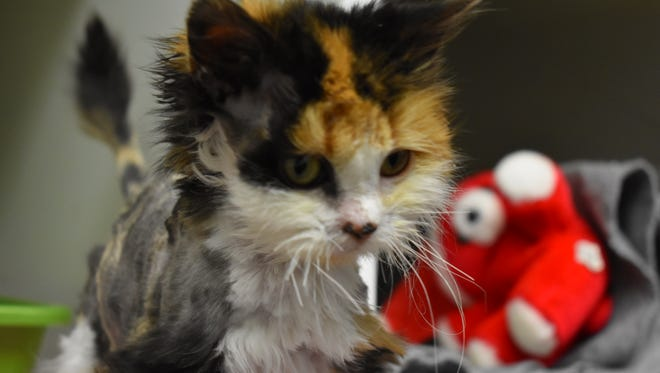 Each year, thousands of Rochester's homeless pets like Ani are brought to Lollypop Farm.
