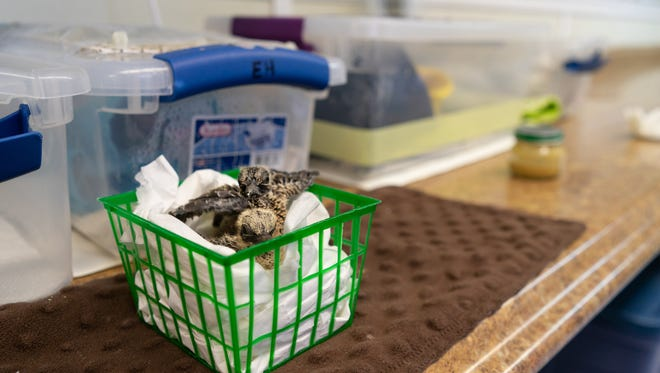 The Wildlife Sanctuary of Northwest Florida takes care of 3,000 to 4,000 animals in need every year.