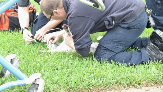 First responders were able to rescue two pets, but a third died after a building fire Thursday.