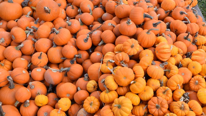 The pumpkin patch in the parking area of First United Methodist Church Alexandria opened Monday, Oct. 1, 2018. Hours are 2-6 p.m. Monday through Thursday; 10 a.m. to 6 p.m. Friday and Saturday; and from 12:30-4 p.m. Sunday. FUMA is located at 2727 Jackson Street. The patch will be open until Oct. 30.