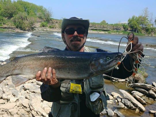 Bob Ski holds a 12-pound Steelie he caught.