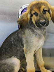 One of the rescued dogs after being groomed and bathed.