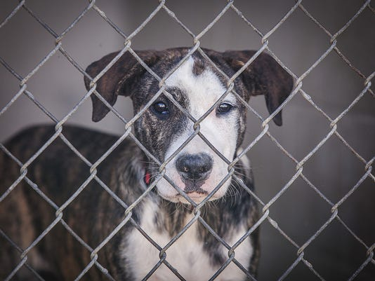 -LCJBrd2_10-05-2014_KY_1_A019~~2014~10~04~IMG_Exchange-Shelters-So_2_1_9T8L6.jpg