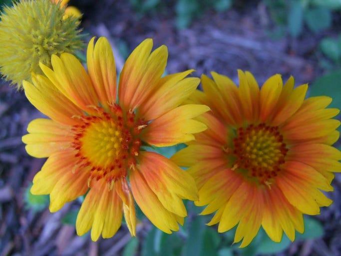 Flowers at McCrory Gardens in Brookings.
