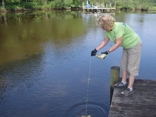 Nan Zamorski lowers a Secchi disk at Deep Creek to measure water clarity for the Nanticoke Watershed Alliance.