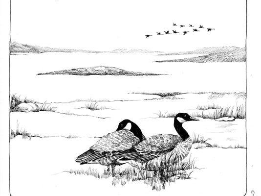 TOS_Bird_migration.jpg