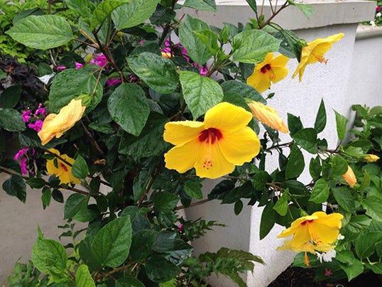 HG Garden plant 2