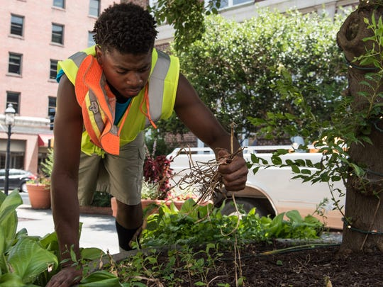 Anthony Morris,18, of Salisbury, removes weeds from