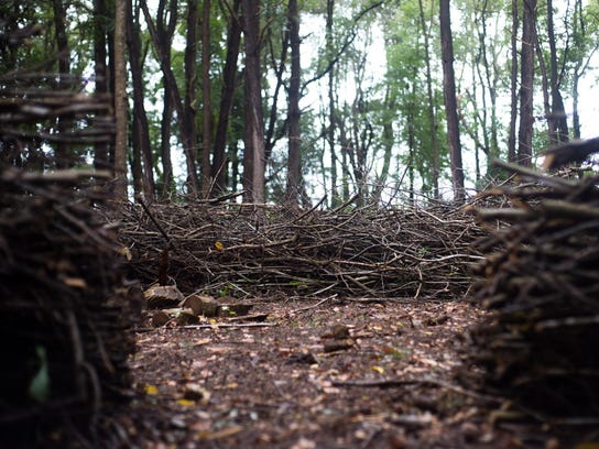 woods (11 of 14)