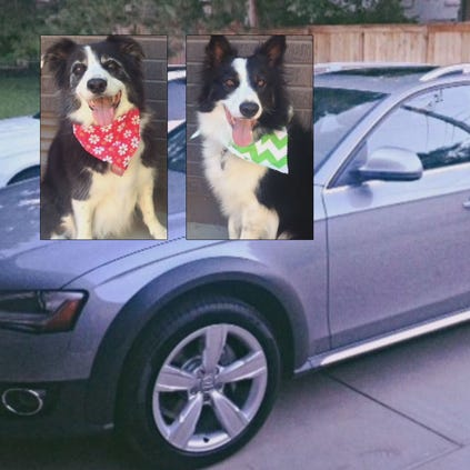 A Boulder woman hopes to be reunited with her two dogs. They were stolen along with the vehicle they we