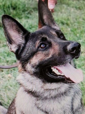 Middletown police K-9 Gunner died in a fire Monday.