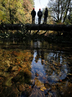 Blue Ridge Timber Company employees walk across a felled tree on a side channel to the McKenzie River in McKenzie Bridge, Ore.