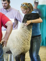 Cristin Dreher holds her ram's head high during judging at the Montana State Fair Open Sheep Show on Saturday in the Livestock Pavilion.