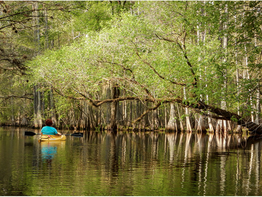 """A Relaxing Paddle"" taken by Ann Hopta at Withlacoochee"