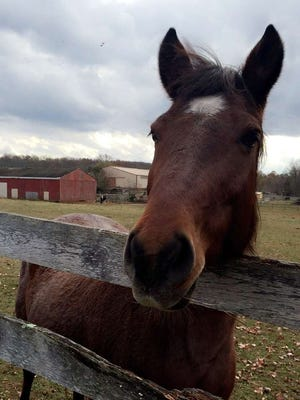 A 17-acre equine farm has become the 11th farm in Monroe and the 55th in Middlesex County preserved forever.