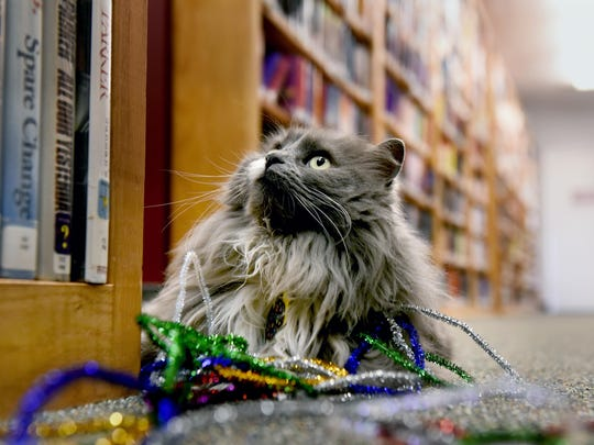 Aww Kitty has been forced out of her home, the Lyons Township District Library, after complaints.