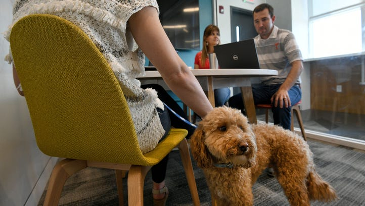 6 tips for 'Bring Your Dog to Work Day'